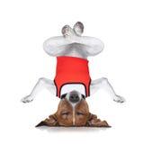 Cane di yoga Fotografia Stock