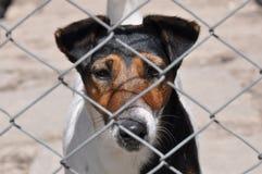 Cane dietro la rete fissa fotografia stock libera da diritti