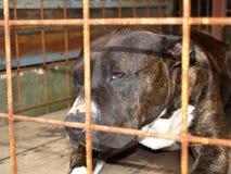 Cane dietro le barre Fotografia Stock