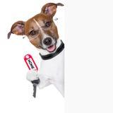 Proprietario domestico del cane Fotografie Stock