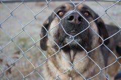 Cane dietro una rete fissa Immagini Stock Libere da Diritti
