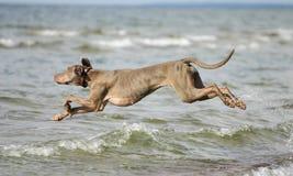 Cane divertendosi nell'acqua Fotografia Stock Libera da Diritti