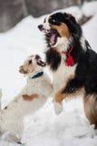 Cane divertente che gioca nella neve Immagini Stock Libere da Diritti