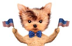 Cane divertente che tiene la bandiera di U.S.A. Concetto del quarto luglio Fotografia Stock Libera da Diritti