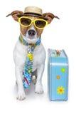 Cane divertente come turista immagini stock