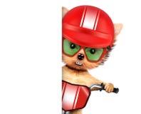 Cane divertente del corridore con la bici, il casco e gli occhiali da sole Fotografia Stock