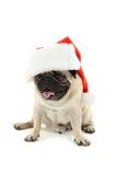Cane divertente del pug Fotografie Stock