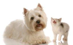 Cane divertente e lotta di gatto Immagini Stock Libere da Diritti