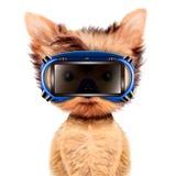 Cane divertente in occhiali di protezione isolati su bianco Fotografia Stock