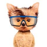 Cane divertente in occhiali di protezione isolati su bianco Fotografie Stock Libere da Diritti