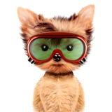 Cane divertente in occhiali di protezione isolati su bianco Fotografie Stock