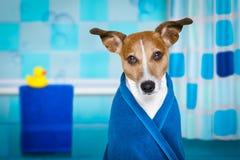 Cane in doccia o nella stazione termale di benessere fotografia stock