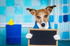 Cane in doccia o nella stazione termale di benessere fotografie stock libere da diritti