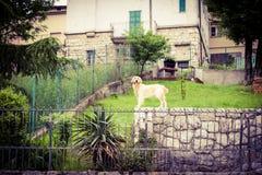 Cane domestico nel giardino privato Fotografie Stock