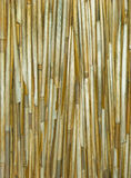 Cane dry background stock photo