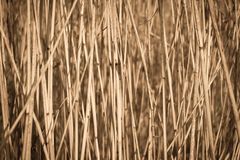 Cane dry background Stock Photography