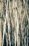 Cane dry background Royalty Free Stock Photography