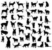 Cane e Cat Silgouettes Fotografie Stock
