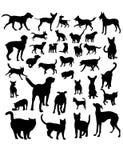 Cane e Cat Silgouettes Fotografia Stock
