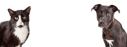 Cane e Cat Website Banner in bianco e nero Fotografia Stock Libera da Diritti