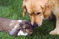 Cane e coniglio Fotografia Stock Libera da Diritti