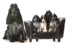 Cane e cuccioli della madre immagine stock libera da diritti