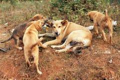 Cane e cuccioli smarriti della madre Fotografia Stock