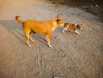 Cane e cucciolo Fotografie Stock