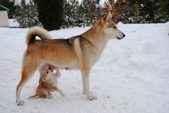Cane e cucciolo Fotografia Stock