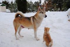 Cane e cucciolo Fotografie Stock Libere da Diritti