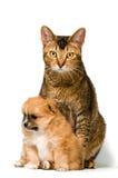 Cane e cucciolo in studio Fotografie Stock Libere da Diritti