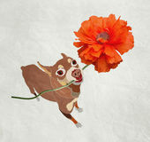 Cane e fiore Fotografia Stock