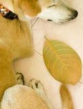 Cane e foglio Fotografie Stock Libere da Diritti