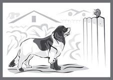Cane e gattino di Landseer Fotografia Stock Libera da Diritti