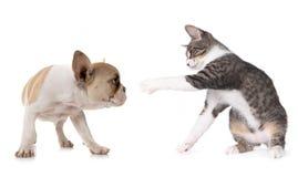Cane e gattino svegli del cucciolo su bianco Immagini Stock