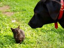 Cane e gatto Fotografie Stock Libere da Diritti