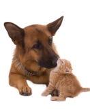 Cane e gatto Immagine Stock Libera da Diritti