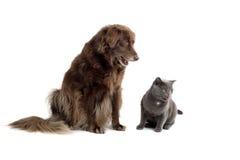 Cane e gatto fotografia stock