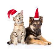 Cane e gatto in cappelli rossi di natale che esaminano macchina fotografica Isolato su bianco Immagini Stock