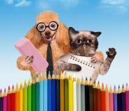 Cane e gatto con i rifornimenti di scuola Fotografia Stock