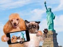 Cane e gatto dell'autoritratto Immagine Stock Libera da Diritti
