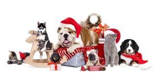 Cane e gatto e kitens che portano un cappello di Santa Immagini Stock