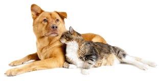 Cane e gatto insieme Fotografia Stock