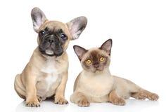Cane e gatto su una priorità bassa bianca Fotografia Stock