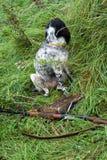 Cane e gioco di caccia Fotografia Stock Libera da Diritti