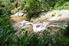 Cane e piccola cascata o cascata nella foresta Fotografie Stock