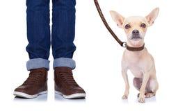Cane e proprietario fotografie stock