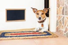 Cane e proprietario immagini stock