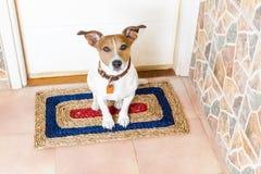 Cane e proprietario con il guinzaglio fotografie stock