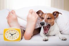 Cane e proprietario di sonno Fotografie Stock Libere da Diritti